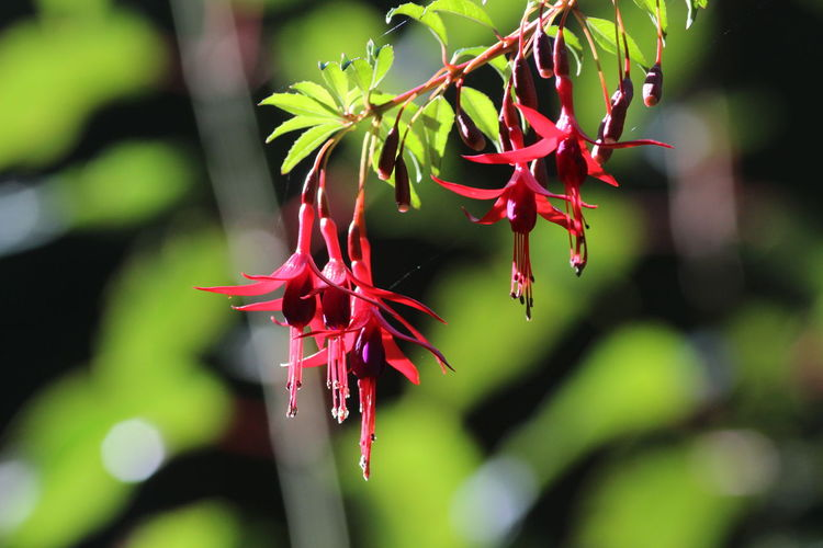 Aljaba Beauty In Nature Close-up Day Flora Flower Focus On Foreground Fragility Freshness Growth Naturaleza Nature New Life No People Outdoors Patagonia Patagonia Argentina Plant Red Tree