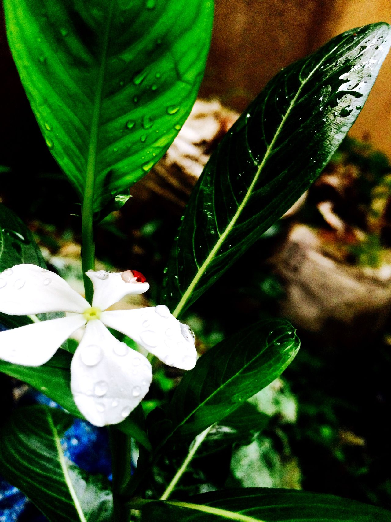 Small life never becomes dark it shines more with droplets of happiness