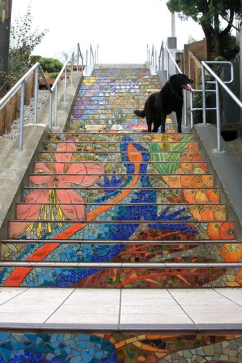 Almost to the top~148 steps Stairways Walking Around Dog Cute Pets My Blue Obsession I Love My Dog Streetphotography Eye Em A Dog My Dogs Are Cooler Than Your Kids Hi!