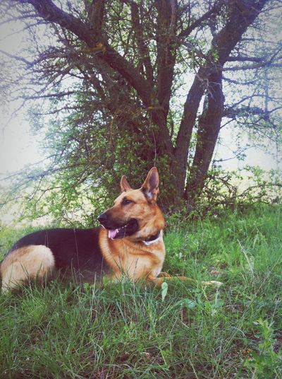 Un descansito durante el paseo ☺️ Taking A Break Thor  Thorthedog Dog Dogs I Love My Dog Dog Of The Day