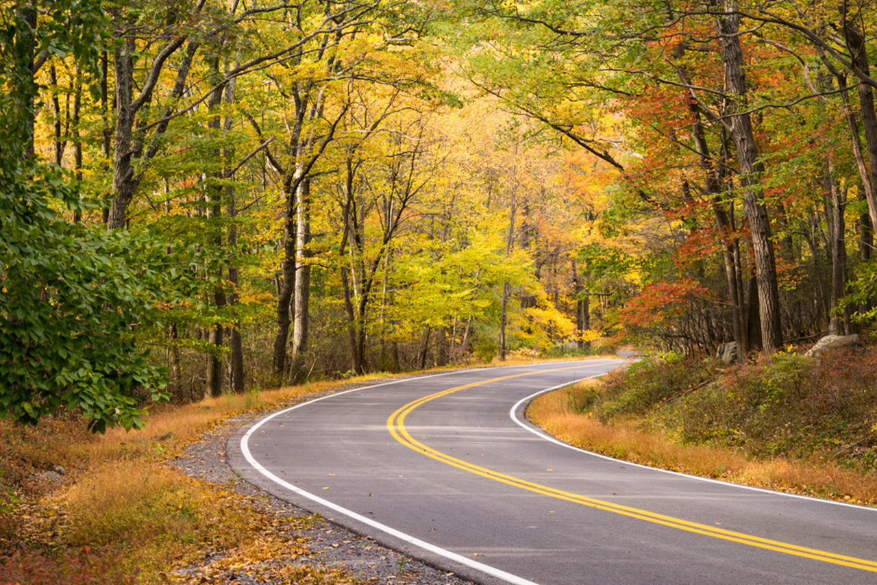 The Fall Road Autumn Colorful Fall Foliage New York Park Woods First Eyeem Photo