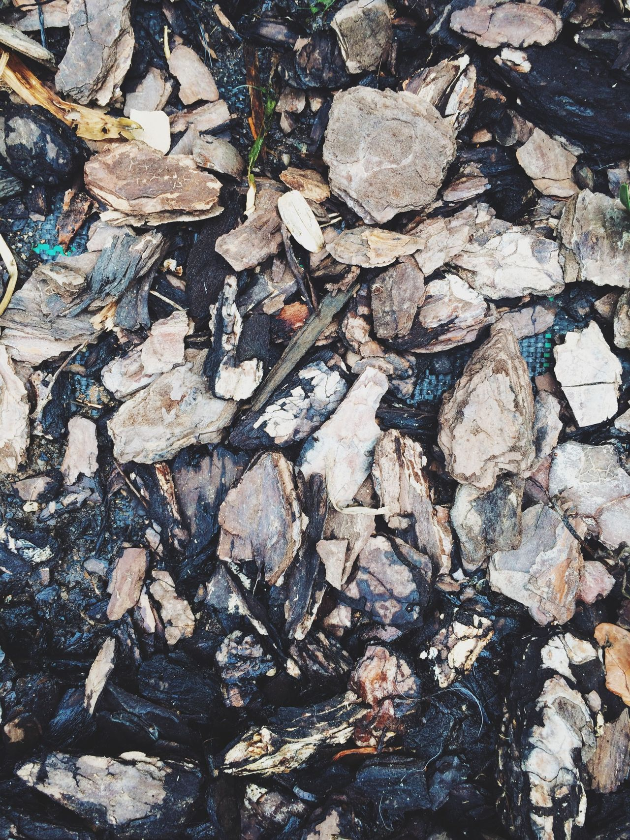 Beautiful stock photos of wood, Bark, Bio, Chopped, Compost