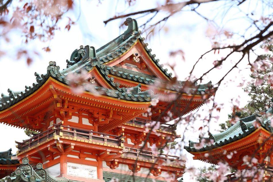 """平安神宮暫く続きます^ ^ Architecture Enjoying Life Introducing Culture Of Japan Which Must Be Left To The Future…… """"未来に残す日本の文化"""""""