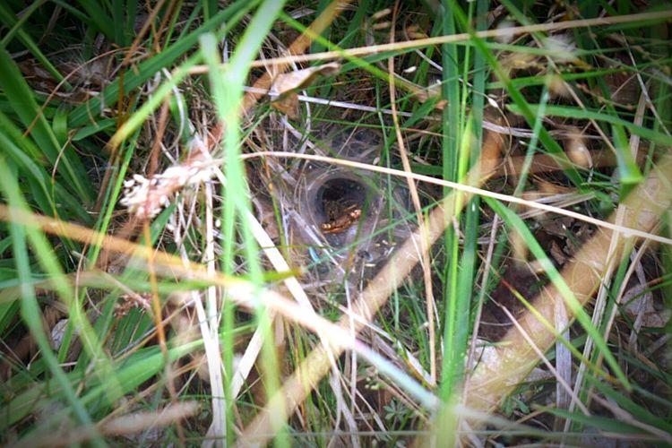 Spider creeping, Richmond, London Richmond Park, London Richmond Spiderweb Spiders Cave Cool Web Spinning Deep In The Grass Close Up Grass Focus On Spider Green Nature Creepy Crawlies