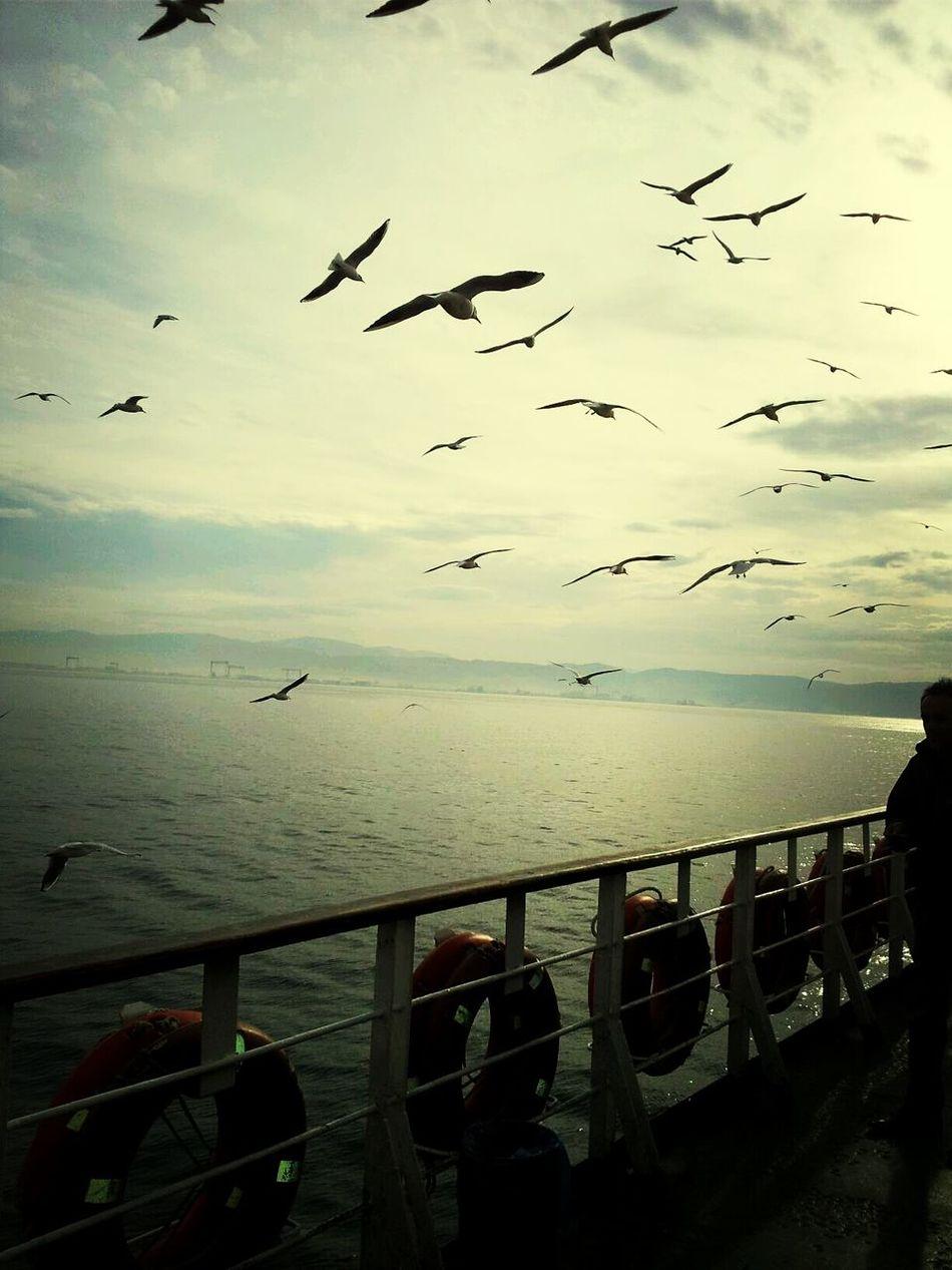 Mutluluk Martı Deniz Sea And Sky