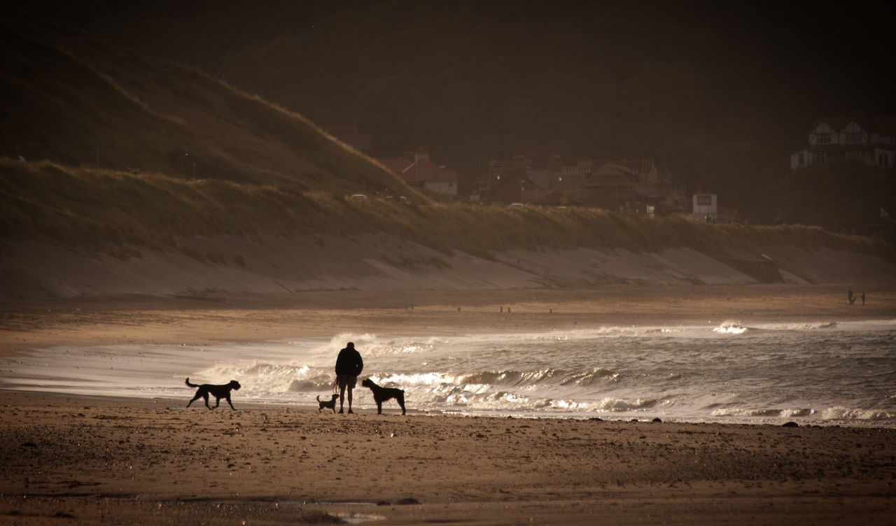 Be Beach Coastline Dogs Exercising My Dogs Sea Seascape Seaside Shore Wave