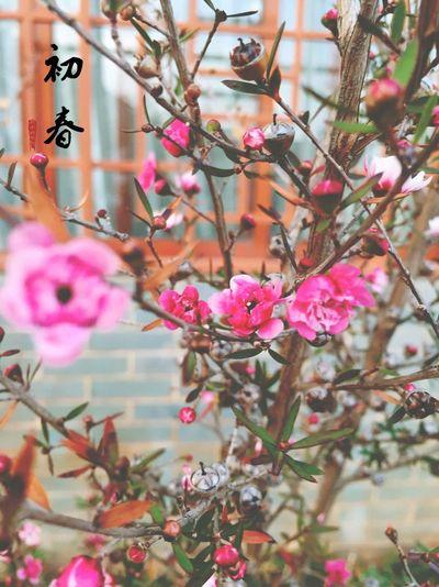 初春 First Eyeem Photo
