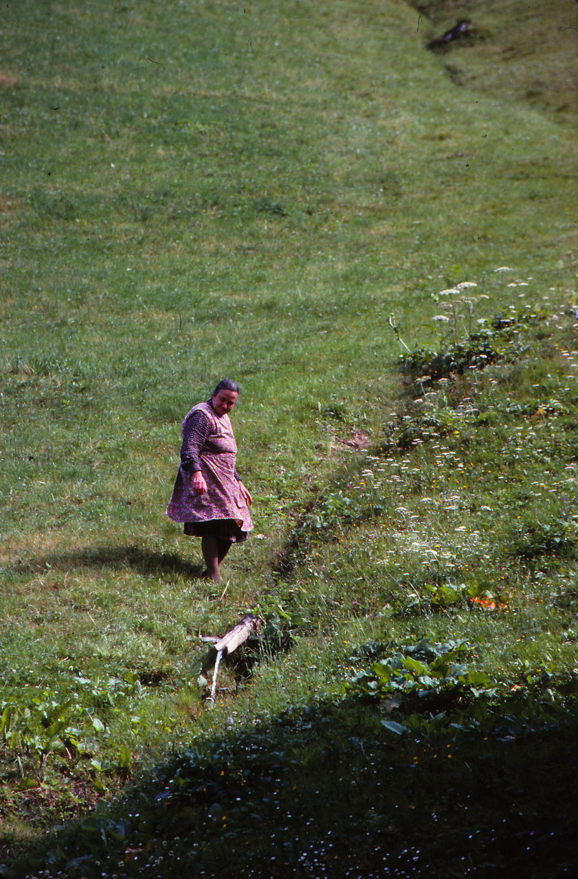 field, real people, day, animal themes, outdoors, full length, mammal, one animal, nature, grass, growth, one person, plant, working, farmer, domestic animals, pets, people