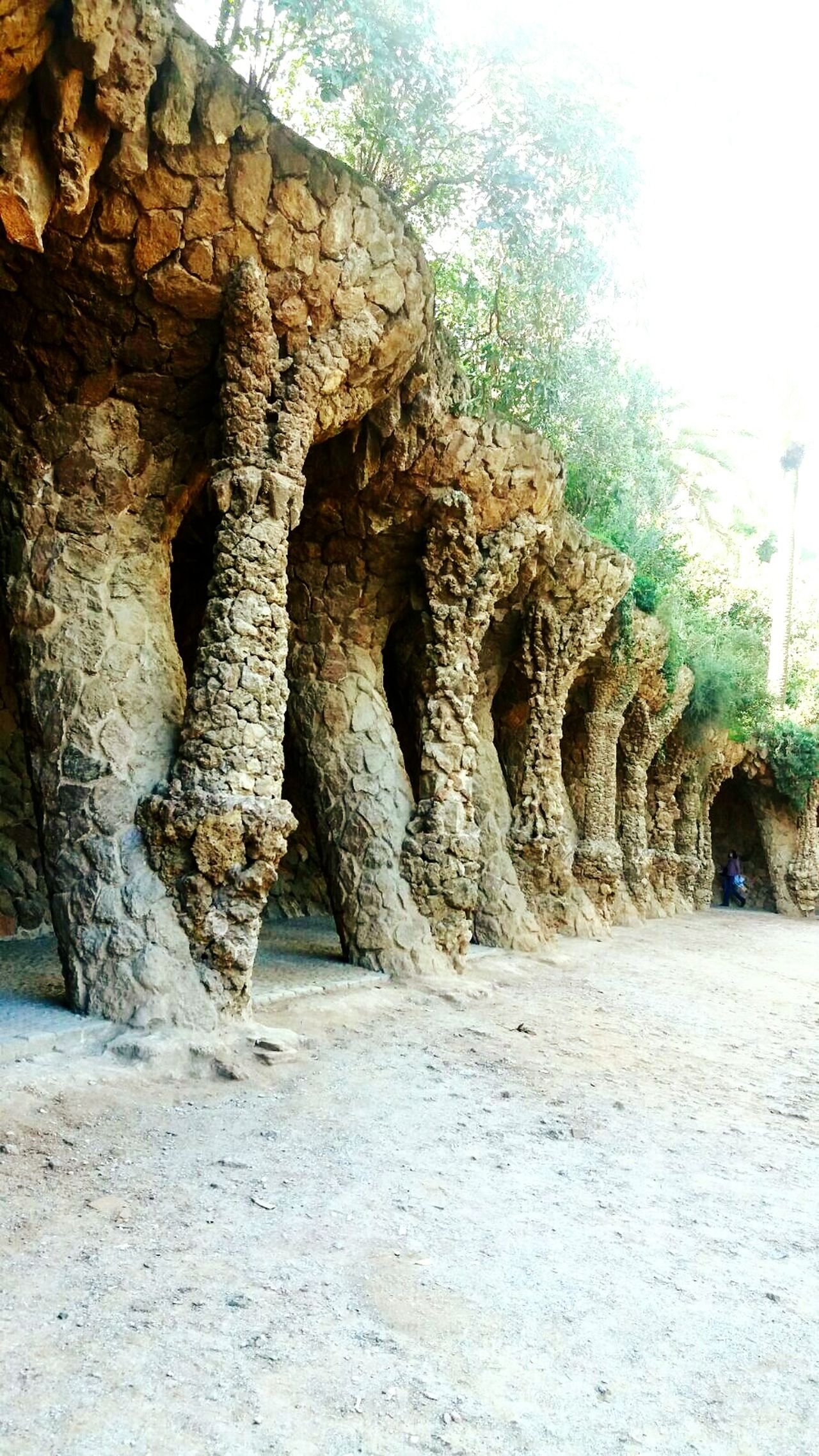 Tree Growth No People Nature Day Textured  Outdoors Beauty In Nature Ancient Civilization Gaudì Architecture Work Gaudi Barcelona Tunel Tunnel Nature Architecture Arch