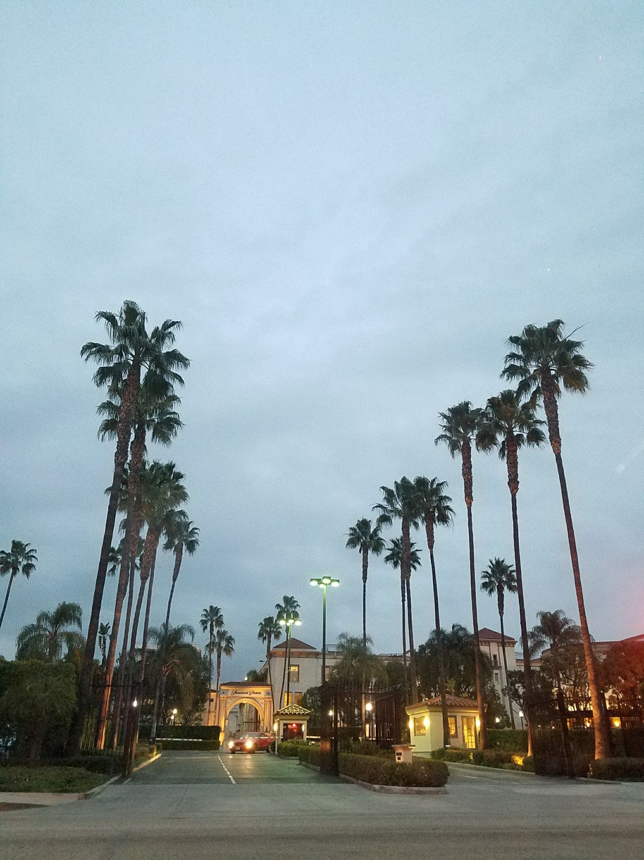 Nature No People Palm Tree Palm Trees Paramount  Studio Shot Tree View