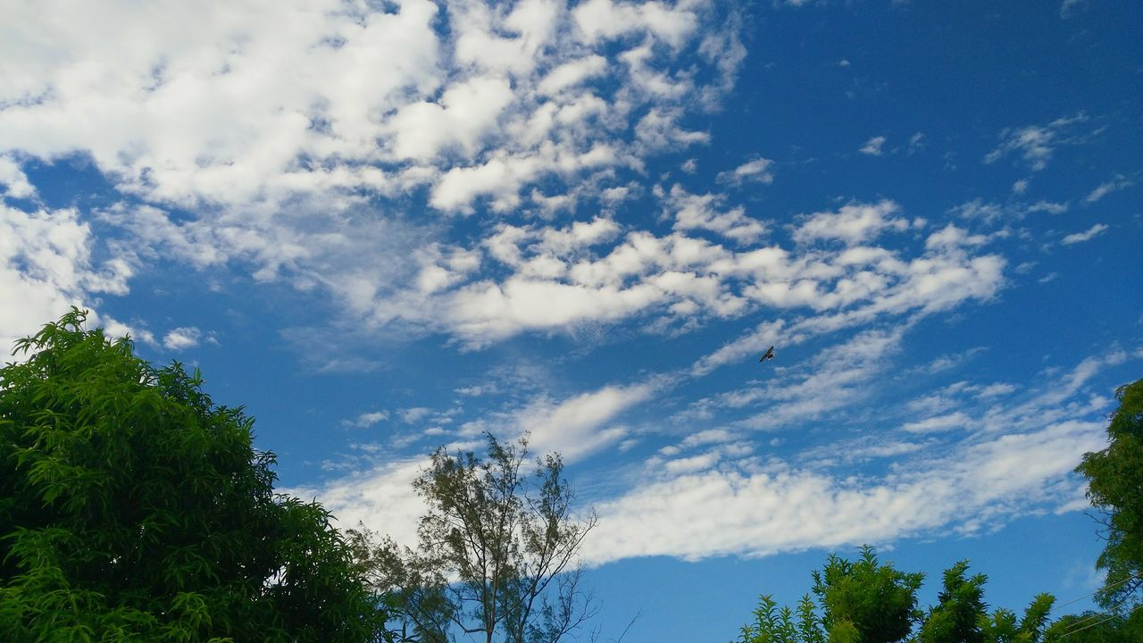 Belle View... Tree Low Angle View Scenics Tranquil Scene Beauty In Nature Sky Tranquility Nature Cloud Blue Day Outdoors Majestic Non-urban Scene Greatlife Cumulus Cloud HunterClouds Vibrant Color Thinking About Life EyeEm Gallery Huaweig7 Taking Photos Bright White Color Alone Time