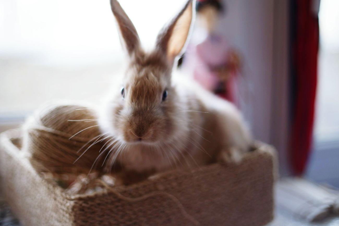 Coco Rabbit ❤️ CocoChanel
