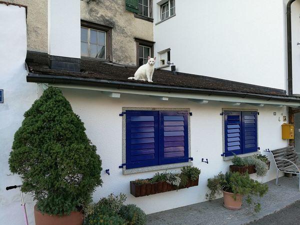 Architecture Building Exterior Built Structure Cat