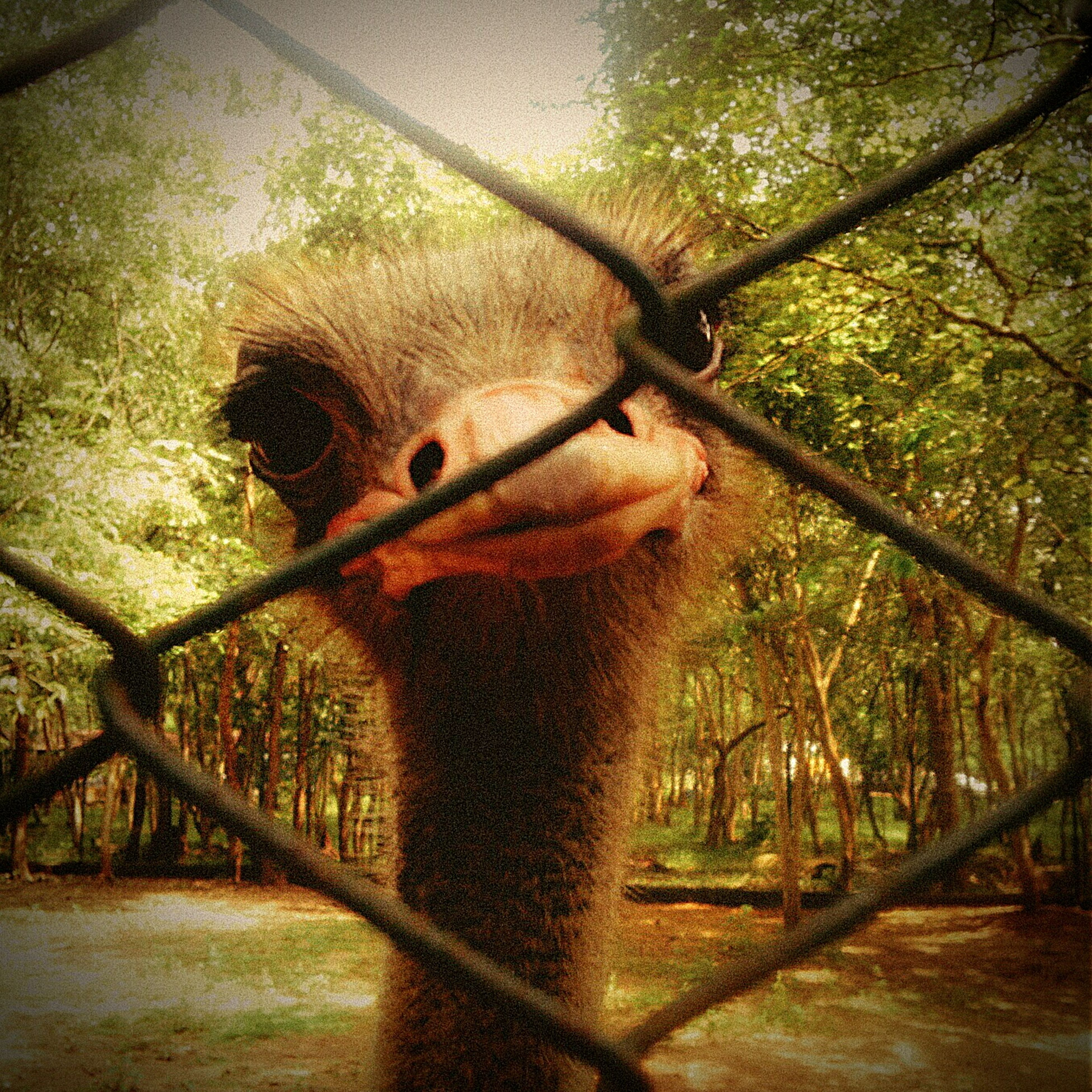 animal themes, one animal, bird, animals in the wild, wildlife, tree, branch, close-up, nature, beak, fence, animal head, focus on foreground, no people, day, outdoors, side view, wood - material, animals in captivity, perching