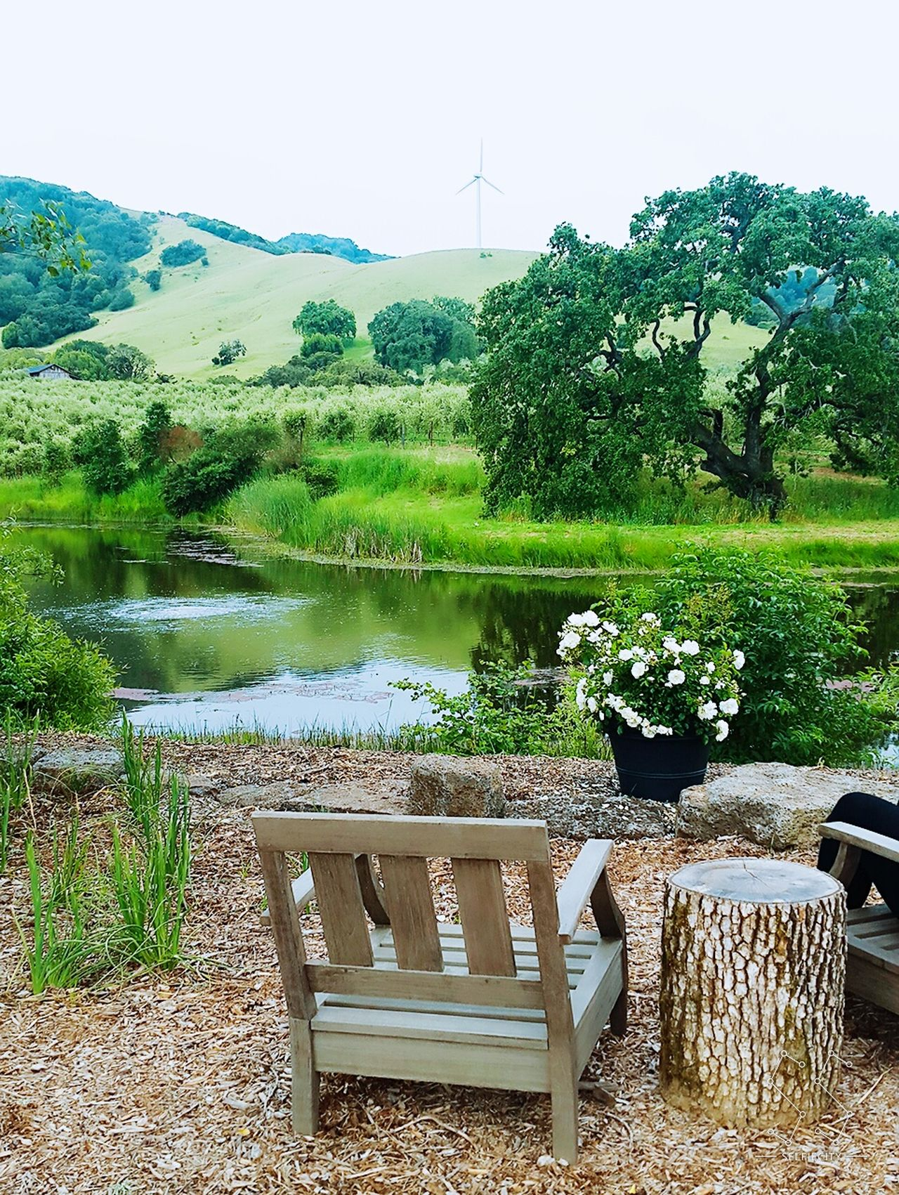 Original Experiences America Olive Tree Valley California Vineyard Serene Tranquility View Senic Vacation Trip Tourist Peaceful Windmill Greenery