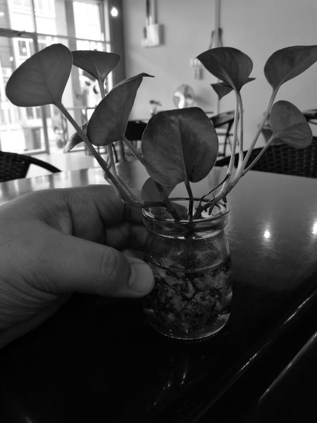 Perfect and Imperfect. This photo was taken at TasteProject, a cafe with beautiful deco in it and of course, great food! If you happen to go to Melaka and love Pasta, come over to Semabok, Melaka. Monochrome Monochrome Photography Huaweiphotography Blacknwhite HuaweiP9 Huaweimobilemy Malacca