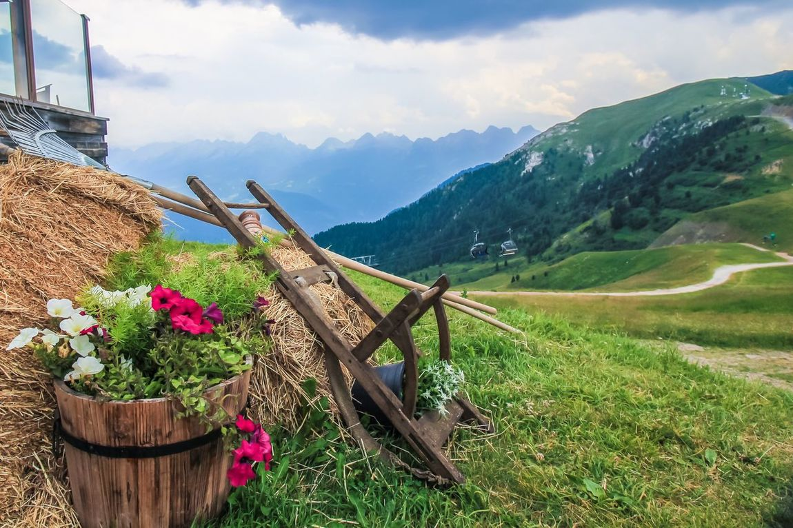 Alpine Flowers And Herbs Alps Sky Mountains Sky And Clouds Mountains And Valleys Clouds Amazing View Garden Garden Tools Tools The Great Outdoors - 2016 EyeEm Awards The Great Outdoors With Adobe