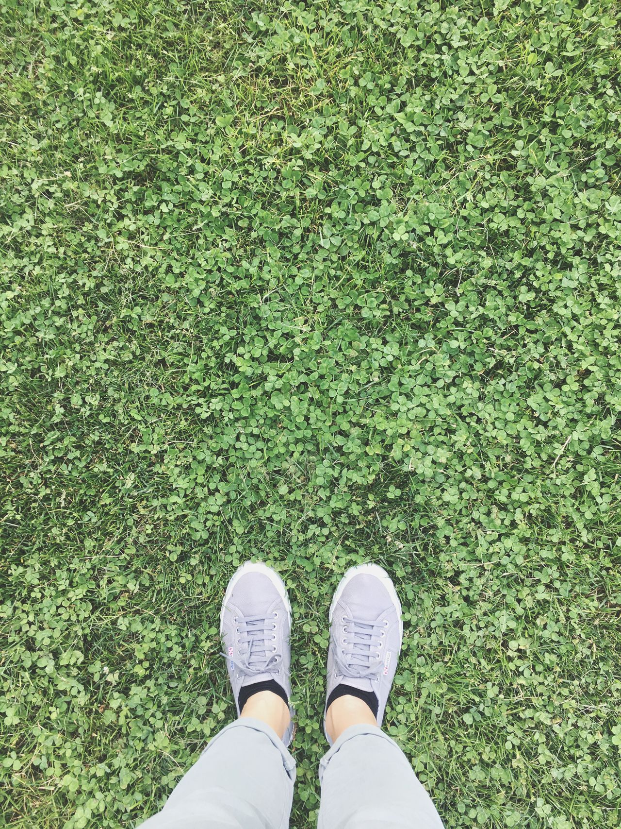 Live For The Story Place Of Heart Grass Standing Shoe Out Of The Box