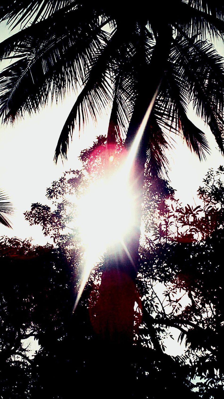 Que rico hueles a tropical Palma Luz Del Sol Buena Vibra Esto Es Mexico Costa Grande Guerrero