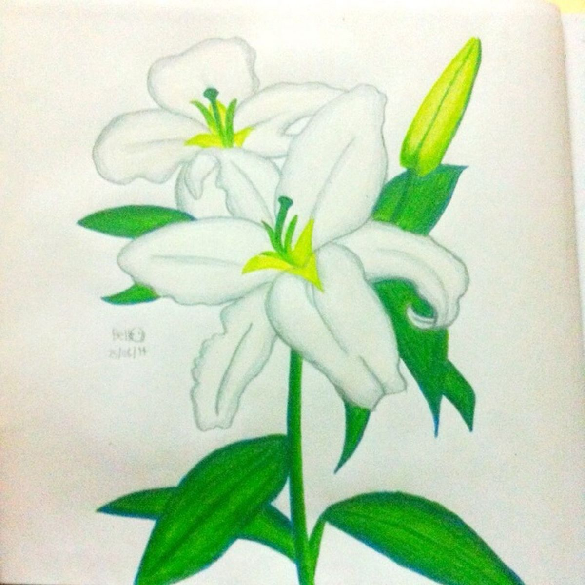 Lily Flower :-) Lily Flower Natural Drawingbyjb Jingerbelllll