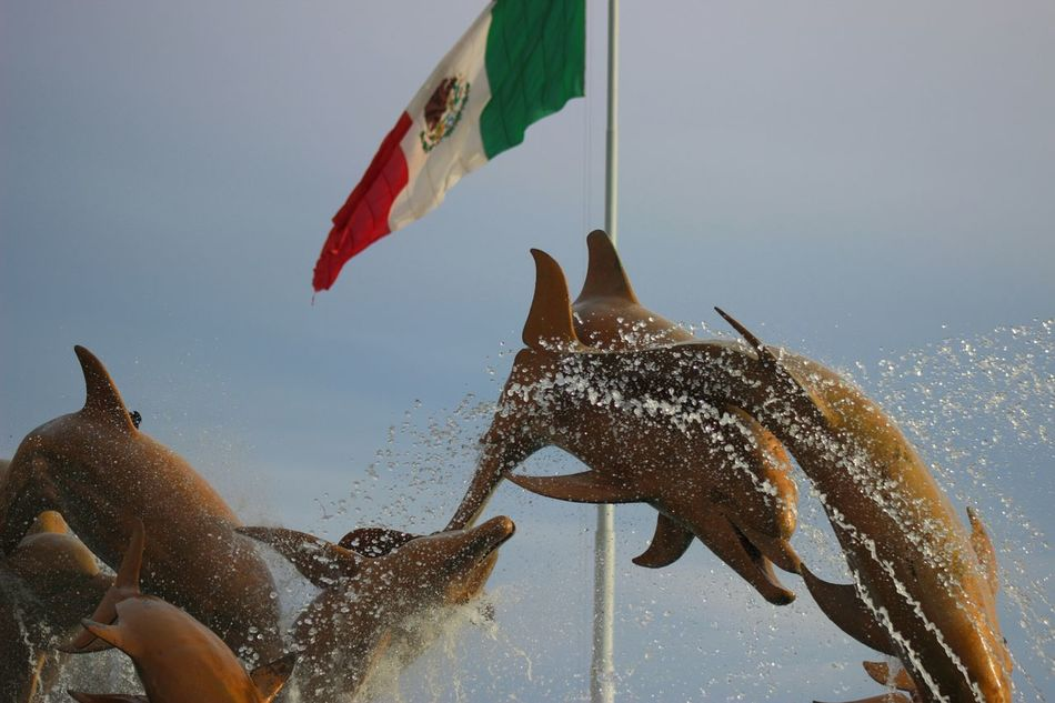 Beautiful stock photos of mexican flag, Animal Themes, Animals In The Wild, Day, Dolphin