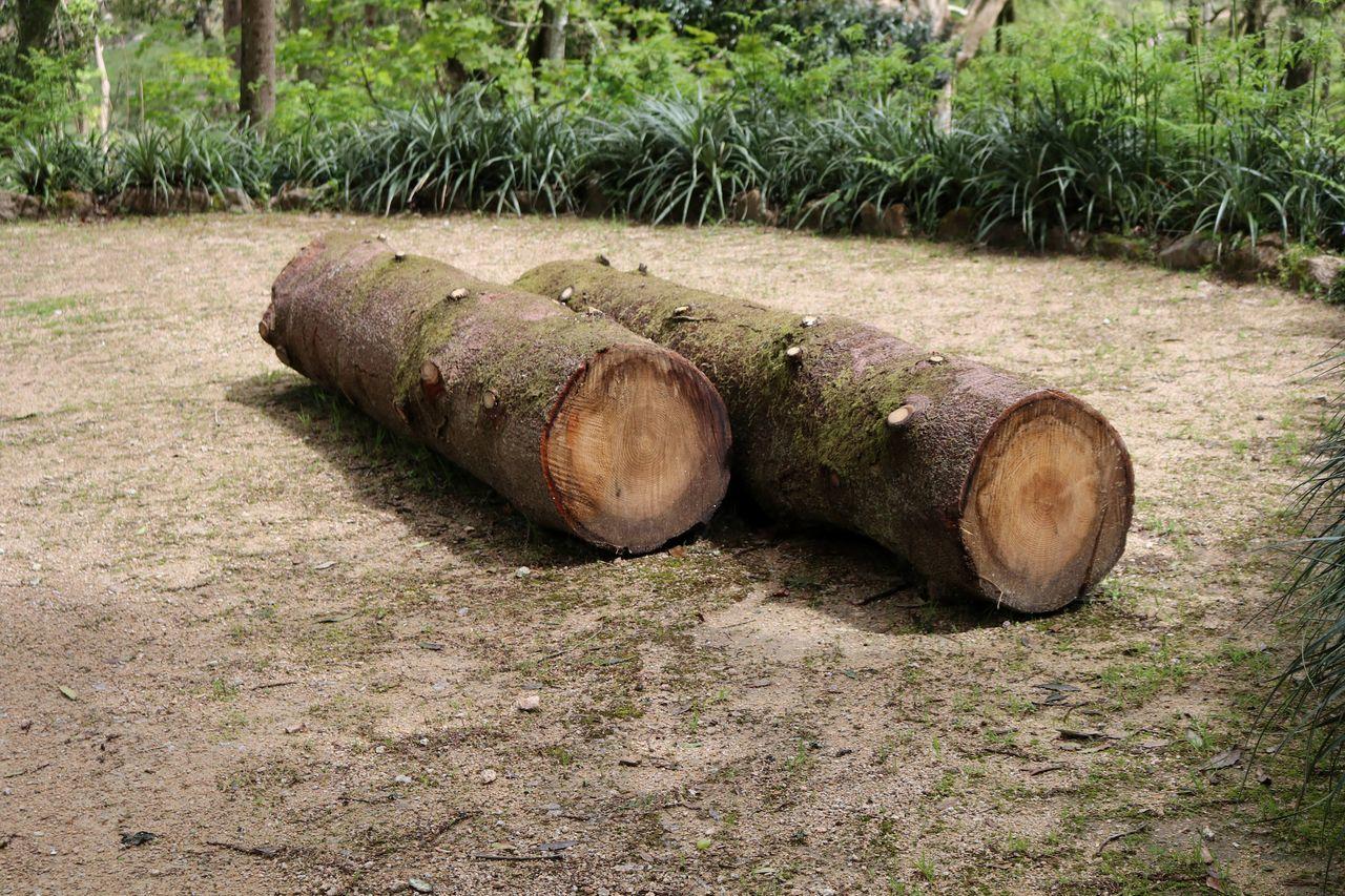 Logs On Field