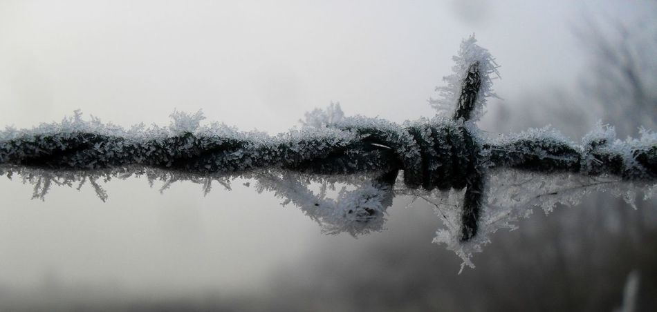 Barbed Wire Cold Frost Hungary Nature No People Rime Szentes Winter Wire