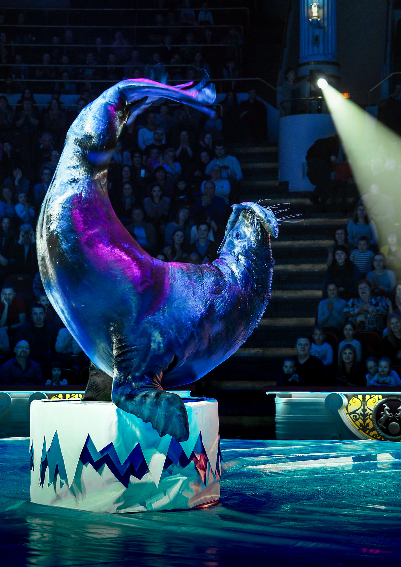 Russia, Moscow, circus, Russian circus, Nikulin Circus, sea lion Adult Adults Only Arts Culture And Entertainment Circus Indoors  Moscow Nikulin Circus Occupation One Person People Performance Performing Arts Event Representing Russia Russian Circus Sea Lion