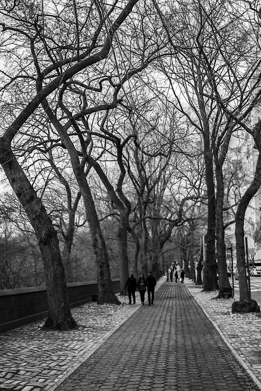 PEOPLE WALKING ON PATHWAY ALONG TREES