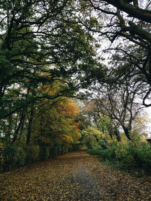 Tree Nature Low Angle View Outdoors Backgrounds Roadtonowhere