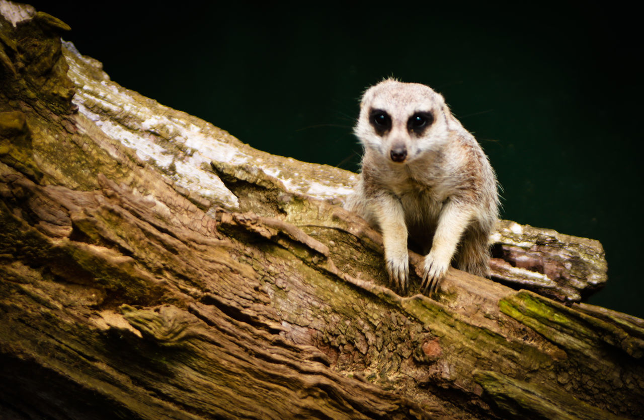 one animal, animal themes, animals in the wild, mammal, animal wildlife, no people, outdoors, day, nature, close-up, tree