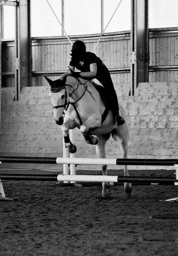 Passion. 🐎❤️ Horse Show Jumping Passion Sport Competition Love Happiness