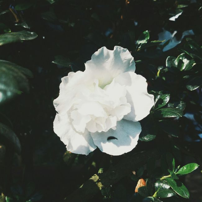 Dreamy... Vscocam Flowers White White Flower WhiteCollection Nature Eyemphotography Quinn's Diary. I own this photoⓒ.