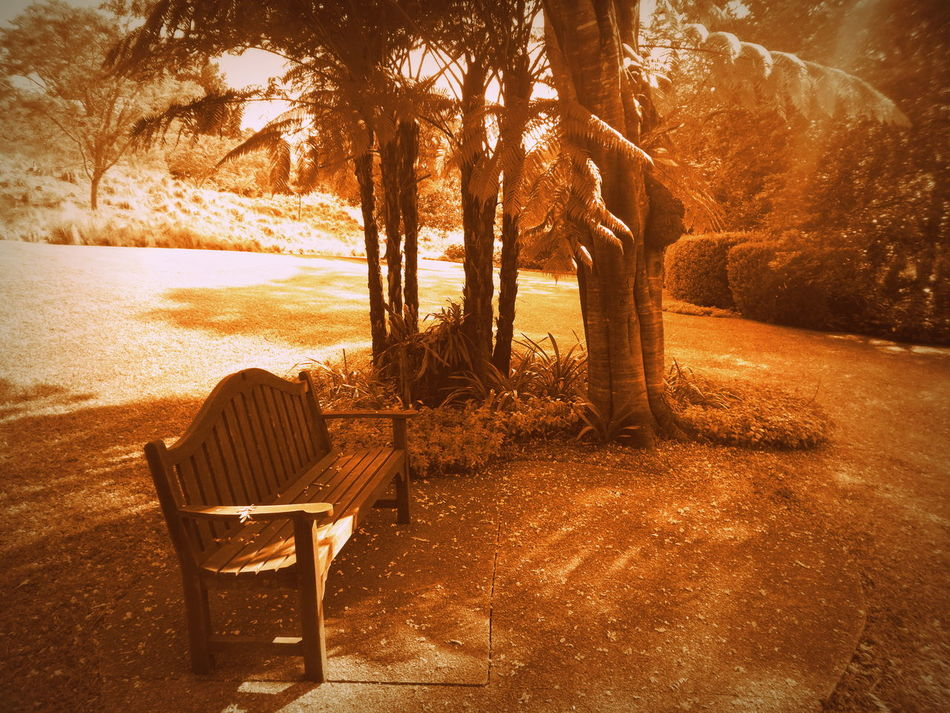 Absence Bench Chair Check This Out Day Empty Garden Grass Light Nikon Nikon Coolpix  Nikonphotography Outdoors Park Park - Man Made Space Park Bench Picasa Relaxation Relaxing Moments Shadow South Africa Summer Taking Photos Tranquil Scene Tree