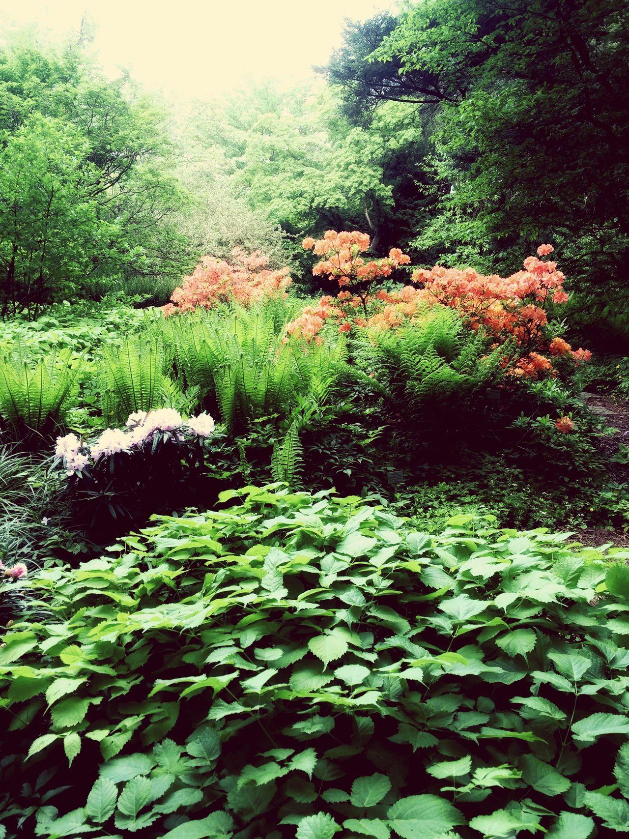 Plants Flowers Forest Paradise Nature