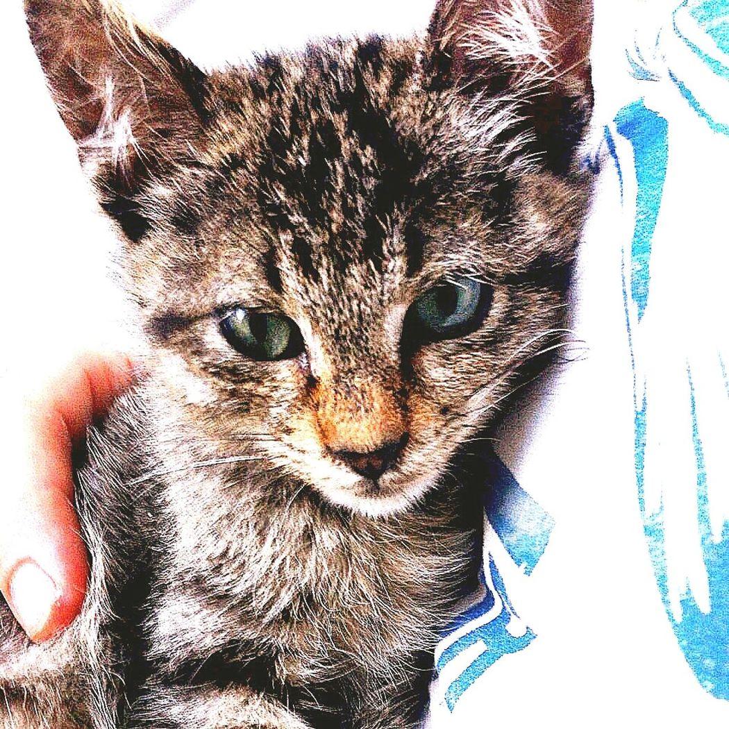 Kedi Yavrukedi Sokakkedisi Sokakhayvanlari Sokakhayvanlarinikoruyun Yaralı Yavru Kediler Kedicik