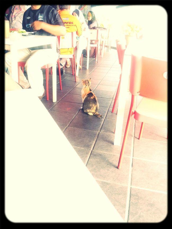 food...duhh...im waiting for the food...haha Cat