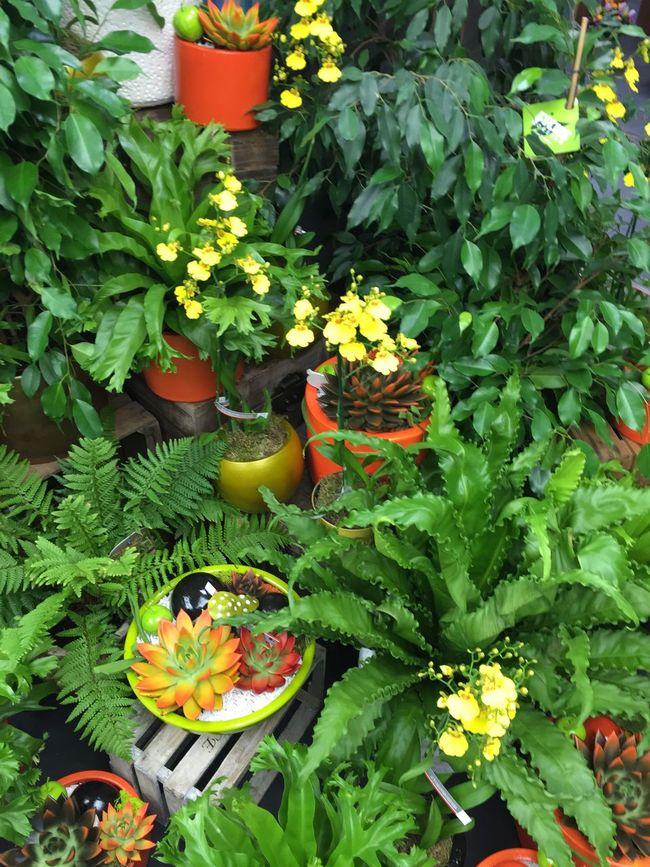 Flowers Flower Flowers,Plants & Garden Igercorse Jardin Jardins