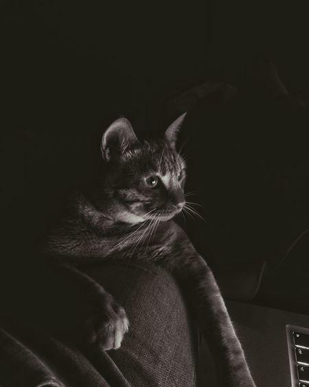 EyeEm Selects Pets One Animal Domestic Cat Animal Themes Animal Domestic Animals Mammal
