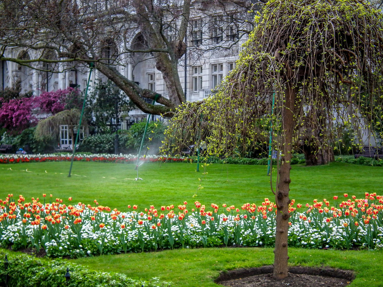 Architecture Beauty In Nature Day England Flower Gran Bretagna Grass Great Britain Green Color Growth Großbritannien Inghilterra Lawn London Londra Lush - Description Nature No People Ornamental Garden Outdoors Park - Man Made Space Plant Soccer Field Spraying Tree