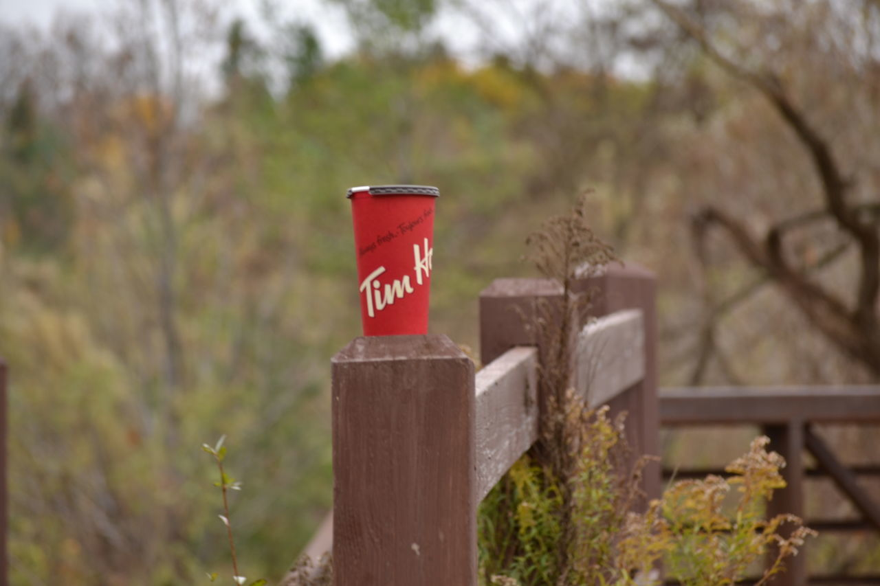 Autumn Day Fence Focus On Foreground Nature No People Outdoors Timhortons