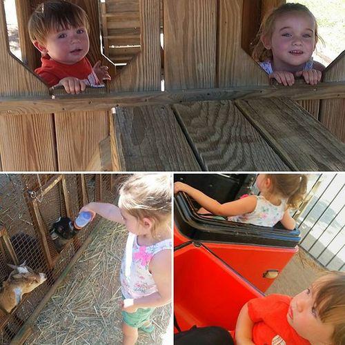 Fun at the farm!