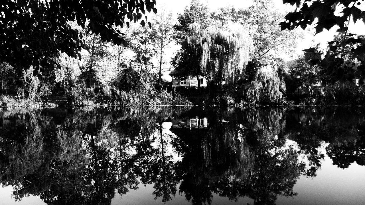 Autumn Blackandwhite Kurca Nature No People Reflection Szentes Tree Water