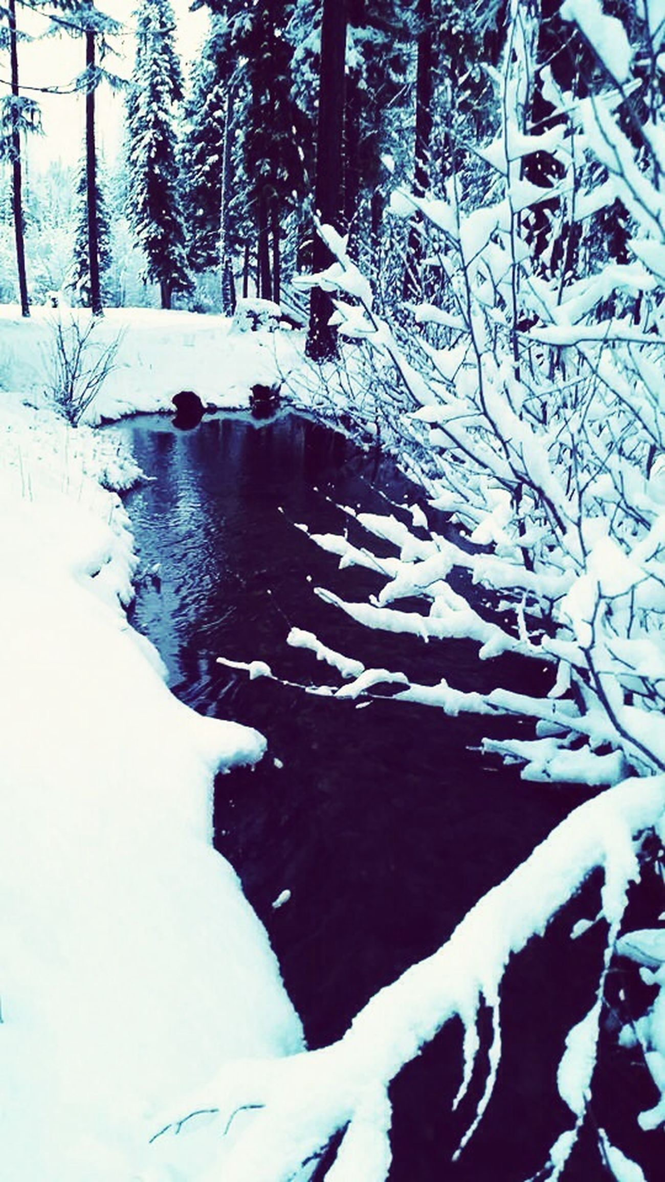 Water Snow Showcase: January Creek Snow ❄ Montana Water_collection January Cold Beautiful