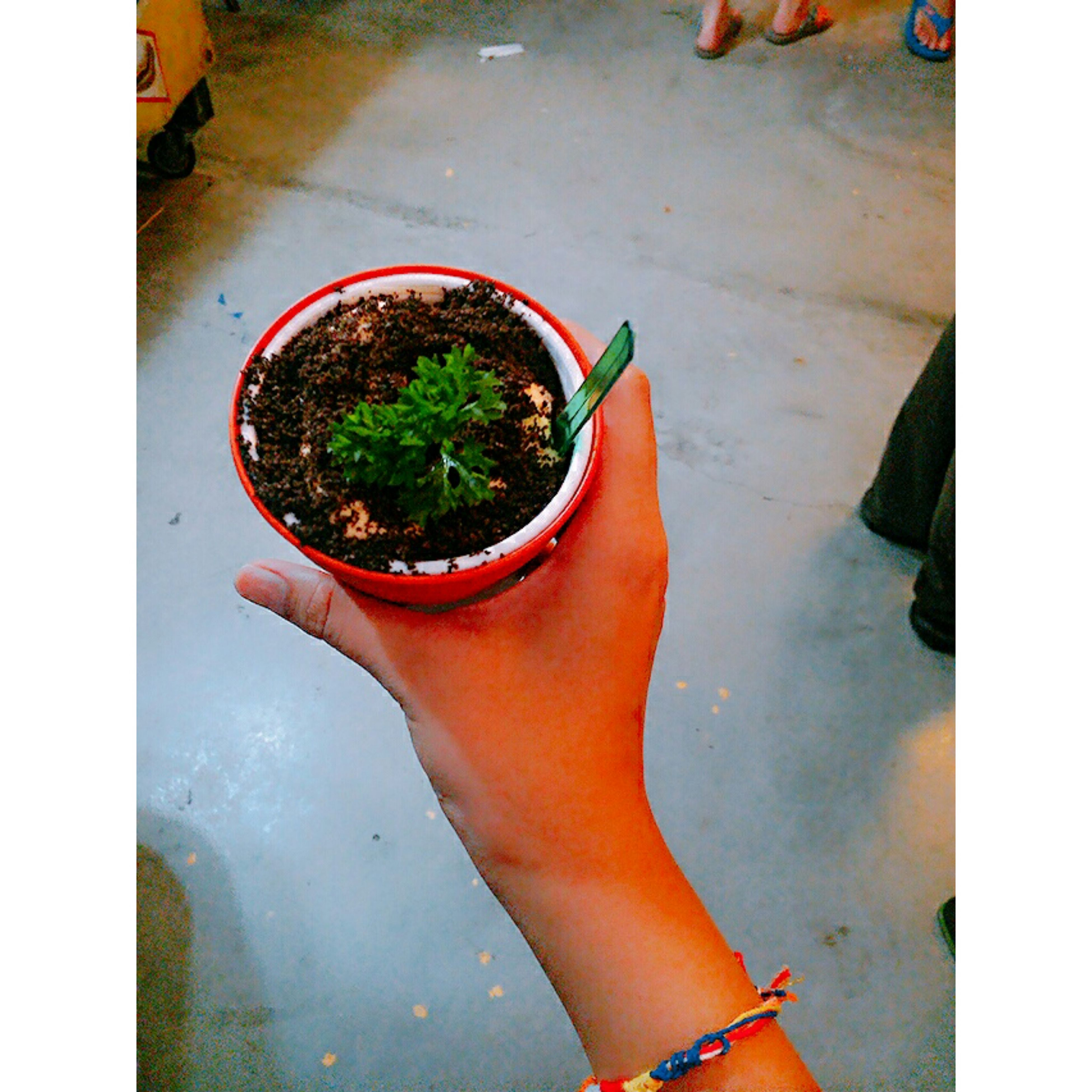 auto post production filter, potted plant, transfer print, plant, high angle view, growth, low section, day, freshness, person, pot plant