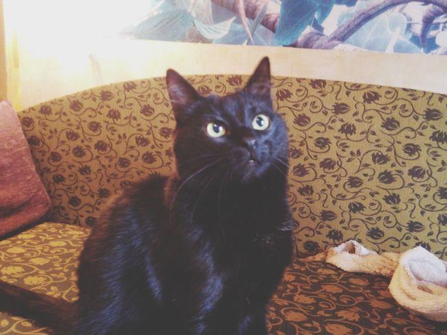 Cat Home Sweet Ho Black