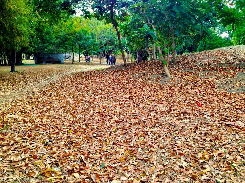 Tree Leaf Trees Park Defoliation