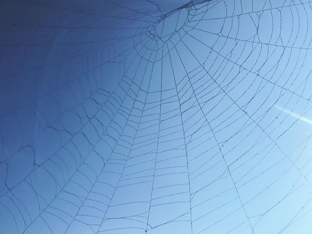 Blue Spider Web against Blue Sky. Low Angle View No People Full Frame Textured  Day Backgrounds Outdoors Sky Close-up Web Spiderweb Nature Create Art Art In Nature The spiderweb was beautiful, but practically invisible- solution - blue spray paint - that's why the silken web has texture --well, and clearly color.
