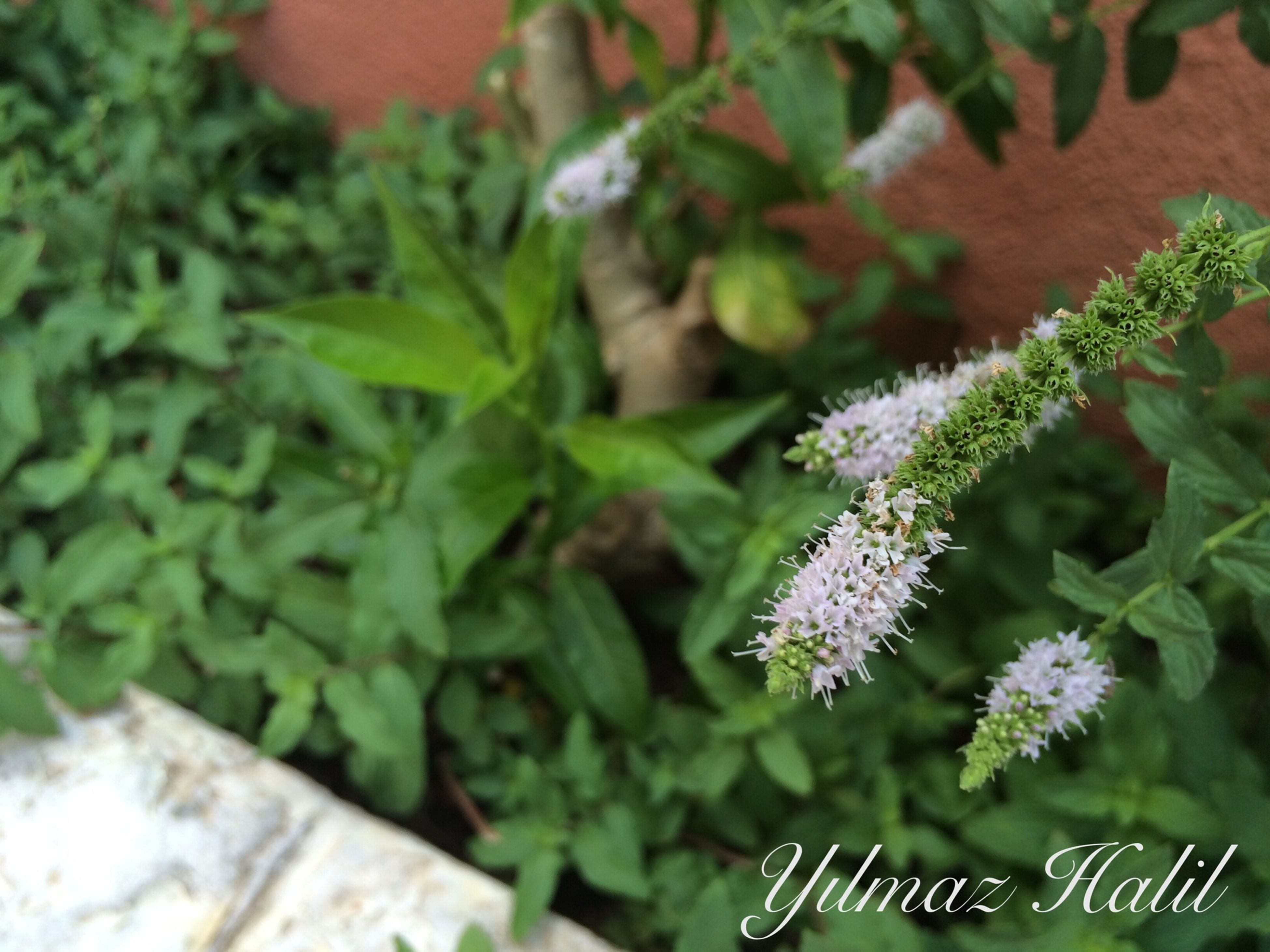 leaf, green color, plant, growth, close-up, freshness, high angle view, flower, nature, fragility, focus on foreground, beauty in nature, purple, potted plant, no people, day, green, outdoors, selective focus, white color
