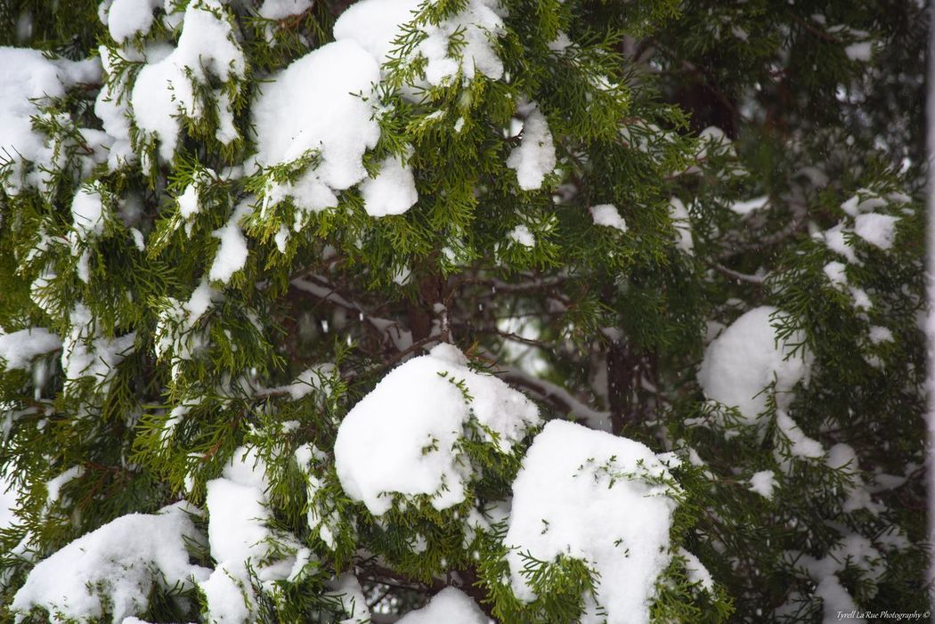 """""""Snow Days."""" Winter Snow Nikon D810 D810Photography Nikonphotography Beauty In Nature Close-up Editor"""
